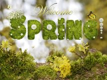 Text Welcome Spring with white flowers on blurred background. Welcome spring text with white flowers on blurred forest background Stock Photo