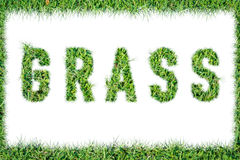 Text word GRASS from green grass isolated Stock Photography