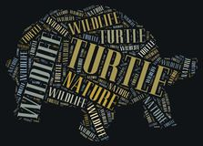 Textcloud of turtle Stock Photos