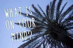 Texte d'écriture ce qui est sur votre question d'esprit La signification de concept large d'esprit pense au bleu grand de palmier Images stock