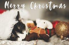 Texte de Joyeux Noël sur le minou mignon dormant dans le chapeau de Santa sur le lit image libre de droits