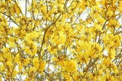 texter koloru żółtego kwiaty Zdjęcia Royalty Free