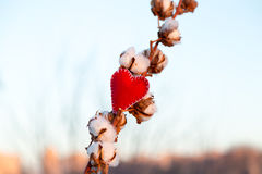 Textile red heart and gossypium. On forest background horizontal Royalty Free Stock Photos