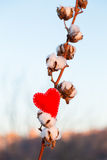 Textile red heart and gossypium. On outdoor background Royalty Free Stock Photo