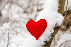 Textile red heart on snowy tree. Branch in winter Stock Photos