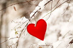 Textile red heart. On snowy tree brunch in winter Stock Image