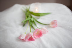 Textile wedding background with pink tulips and candle. woman`s day Royalty Free Stock Images