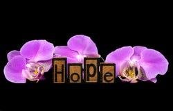 Texto da esperança com as flores cor-de-rosa da orquídea Imagens de Stock