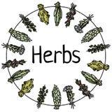 Texto das ervas em ervas secadas em uma grinalda decorativa do c?rculo da linha Imagem lisa do estilo do vetor ilustração do vetor