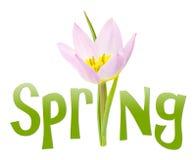 Texto de la primavera con la flor Imagen de archivo