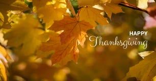 texto feliz de la acción de gracias con las hojas de otoño Imagen de archivo