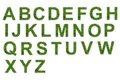 Texto verde da folha Fotografia de Stock