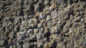 Textue dos escudos do mar na rocha do mar foto de stock