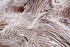 Textuer de bois rugueux Photo libre de droits