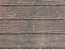 Textuerd de piedra del ladrillo en la tierra Foto de archivo