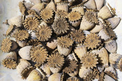 Textur που χτίζεται φυσικό των ξηρών λουλουδιών Στοκ φωτογραφία με δικαίωμα ελεύθερης χρήσης