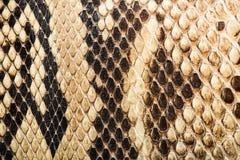 Textur av äkta snakeskin Arkivbild