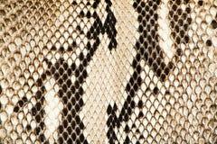 Textur av äkta snakeskin Royaltyfri Foto