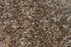 Textur av abstrakt bildande av den mineraliska stenen, traverten arkivfoton