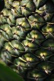 Textur av ananashud Royaltyfria Foton