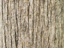 Textur av bakgrund för teakträträdskäll Arkivfoton