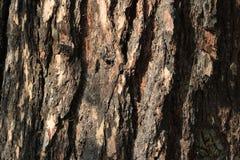 Textur av bakgrund för trädskäll Arkivfoto