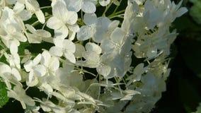 Textur av blommor i morgonsolen Arkivfoto