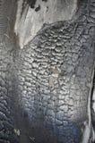 Textur av bränt till kol trä. arkivbild