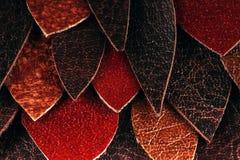 Textur av bruna och röda läderkronblad Fotografering för Bildbyråer