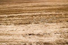 Textur av brunt fossiliserade jord med lappar av gräs, torkat gräs royaltyfri fotografi