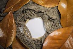 Textur av den bruna varma halsduken, bruna höstsidor av magnolian, ro Arkivbilder