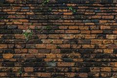 Textur av den forntida tegelstenväggen med gröna växter Arkivbild