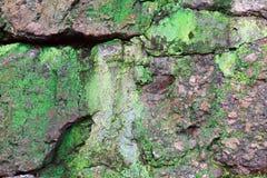Textur av den gamla stenväggen som täckas med grön mossanärbild royaltyfria bilder