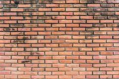 Textur av den gamla tegelstenväggen Fotografering för Bildbyråer
