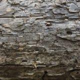 Textur av den gammala treen Bakgrund Royaltyfri Foto