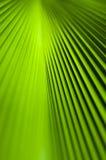 Textur av den gröna palmbladet Arkivbilder