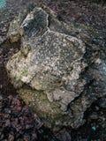 textur av den gröna stenen som skjutas från över royaltyfria foton