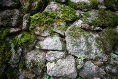 Textur av den naturlig stenen och mossa Arkivbild