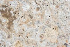Textur av den naturliga stenen (Travertine) för bakgrundsdesign Fotografering för Bildbyråer