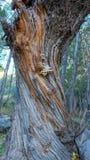 Textur av den skadade avrivna trädstammen med en rugge av träig champinjoner closeup arkivbilder