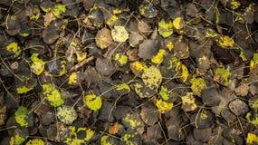Textur av den svarta lövverkhösten för gul gräsplan arkivfoto