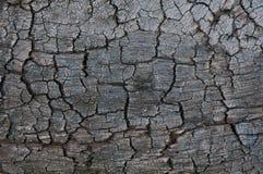 Textur av det brända trädet efter brand Royaltyfri Foto