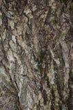 Textur av det naturliga trädskället Arkivfoto