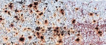 Textur av det rostiga metallarket med skalad vit målarfärg Royaltyfria Foton