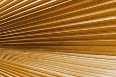 Textur av en färg för palmbladcloseupbrunt Fotografering för Bildbyråer
