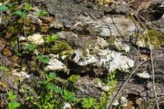 Textur av en gammal rutten trädstam arkivfoton