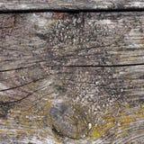 Textur av en gammal trädcloseup Royaltyfria Foton