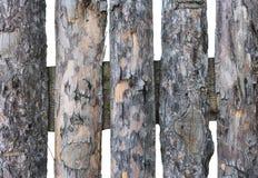 Textur av en gammal trädcloseup Arkivfoto