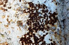 Textur av en gammal vit rostade metalljärnarket detaljerad rost för bakgrund Arkivbilder