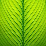 Textur av en grön leaf Arkivfoton